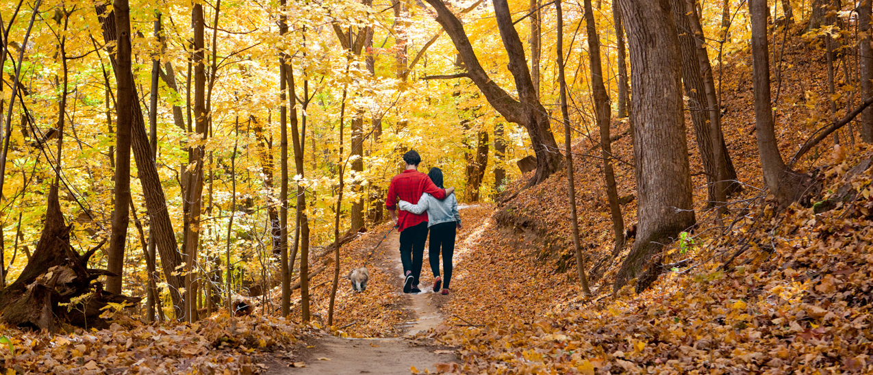 couple hiking in Winona on trail with bright yellow fall leaveses